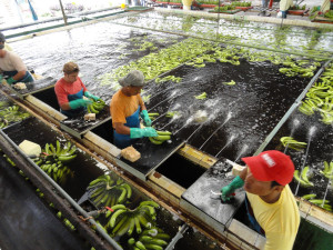 Dole Fresh Fruit at Tenth Avenue Marine Terminal